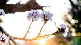 Salida del sol con la flor Fotografía de archivo libre de regalías