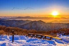 Salida del sol con la llamarada de la lente y las siluetas hermosas de pájaros en el De fotos de archivo libres de regalías