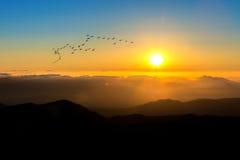 Salida del sol con la llamarada de la lente y las siluetas hermosas de pájaros en el De fotografía de archivo