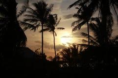 Salida del sol con las palmas en Asia Foto de archivo