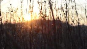Salida del sol con movimiento en primero plano almacen de metraje de vídeo