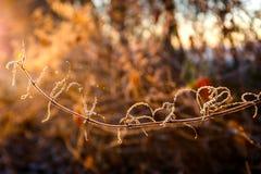 Salida del sol congelada cerca de Wiesmoor Foto de archivo libre de regalías
