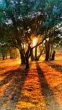 Salida del sol de Bushland Imagen de archivo libre de regalías