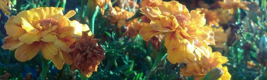 Salida del sol de la flor foto de archivo