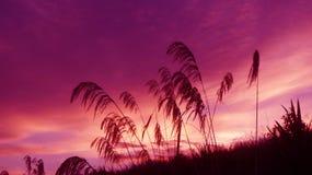 Salida del sol de la mañana en el distrito del waikato en Nueva Zelanda foto de archivo