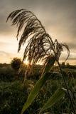 Salida del sol de la madrugada Foto de archivo libre de regalías