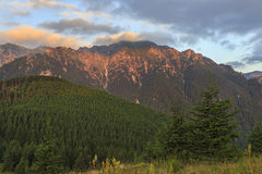 Salida del sol de la montaña del verano con el bosque del pino foto de archivo libre de regalías