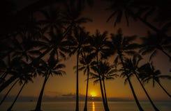 Salida del sol de la palma de coco Imágenes de archivo libres de regalías