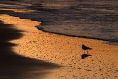 Salida del sol de la playa Imagen de archivo