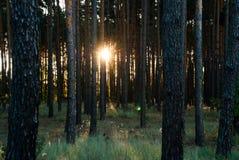 Salida del sol de la visión impresionante sobre el bosque imagenes de archivo