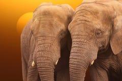 Salida del sol A de los elefantes Imagenes de archivo