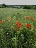Salida del sol de los wildflowers de Kansas imagen de archivo libre de regalías