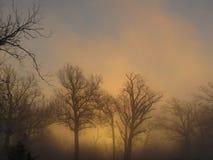 Salida del sol de niebla de oro con la silueta de los árboles Imagen de archivo libre de regalías