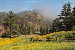 Salida del sol de niebla en el Colorado Rocky Mountains Imagenes de archivo