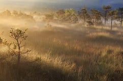 Salida del sol de niebla en un pantano fotos de archivo libres de regalías