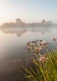 Salida del sol de niebla en un pequeño río Imágenes de archivo libres de regalías
