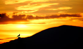 Salida del sol de oro Imagen de archivo