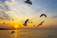 Salida del sol de oro del brillo Fotografía de archivo
