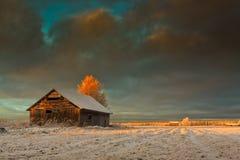 Salida del sol de oro en los campos del invierno Fotos de archivo