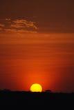 Salida del sol de Serengeti fotos de archivo