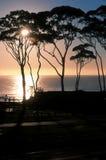 Salida del sol de tres árboles Fotografía de archivo libre de regalías
