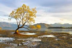Salida del sol de Wanaka del lago Fotografía de archivo