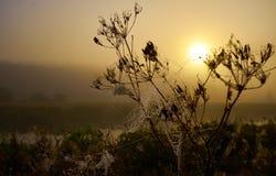 Salida del sol de Yelow en Bielorrusia foto de archivo libre de regalías