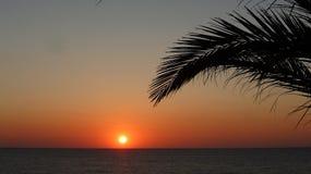 Salida del sol debajo de las palmeras Fotografía de archivo