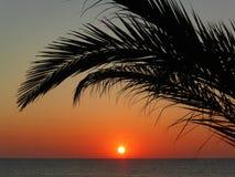Salida del sol debajo de las palmeras Imagen de archivo