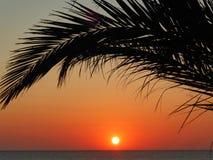 Salida del sol debajo de las palmeras Imagenes de archivo
