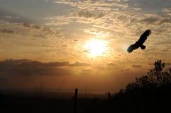 Salida del sol del águila Fotos de archivo libres de regalías
