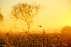 Salida del sol del árbol y de la hierba de goma Fotografía de archivo libre de regalías