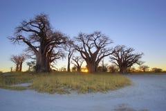 Salida del sol del baobab de Baines Imagen de archivo libre de regalías
