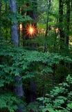 Salida del sol del bosque imagenes de archivo