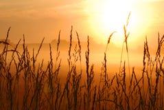 Salida del sol del campo de trigo Foto de archivo libre de regalías