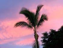 Salida del sol del caramelo de algodón de Bahamas Fotos de archivo libres de regalías