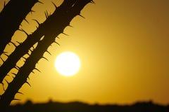 Salida del sol del desierto Foto de archivo