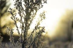 Salida del sol del invierno Fotos de archivo libres de regalías