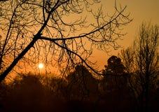 Salida del sol del invierno debajo del árbol del invierno Foto de archivo