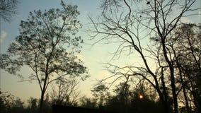Salida del sol del lapso de tiempo con el árbol oscuro almacen de video