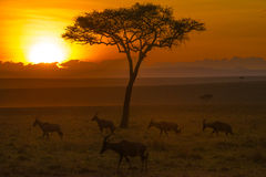 Salida del sol del Masi Mara Fotografía de archivo