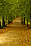 Salida del sol del otoño en el bosque Fotografía de archivo