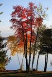 Salida del sol del otoño en el lago sugar Foto de archivo