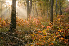 Salida del sol del otoño en las dunas S.P. de Indiana. Fotografía de archivo