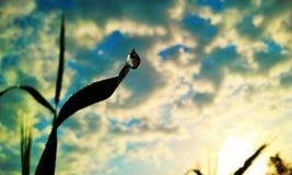 Salida del sol del verano Fotografía de archivo