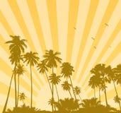 Salida del sol del verano con las palmas Foto de archivo libre de regalías