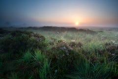 Salida del sol del verano sobre pantano Foto de archivo libre de regalías