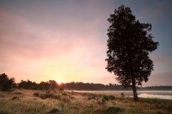 Salida del sol del verano sobre prado por el lago Foto de archivo libre de regalías