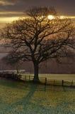 Salida del sol detrás de un árbol Imágenes de archivo libres de regalías
