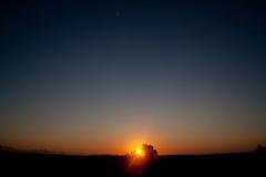 Salida del sol detrás del árbol foto de archivo